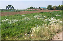 TM2743 : Mixed cropping in field south of Walk Barn by Andrew Hill