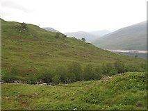 NN3268 : Allt Crunachgan by Richard Webb
