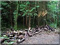 C0734 : Trees and logs, Ards Forest Park by Rossographer