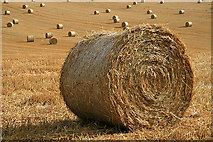 NT5943 : Harvest bales at Legerwood by Walter Baxter
