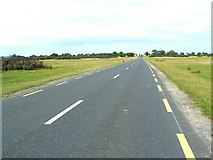N7414 : Road across the Curragh by James Allan