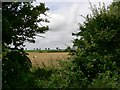 TG4819 : Views through the hedge by Wendy North
