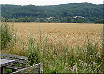 SO5635 : View across the wheat from Shipley Gardens by Pauline E