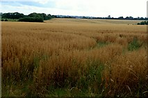 O1751 : Ripened  Grainfield, Brownstown Co.Dublin. by Colm O hAonghusa