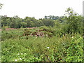SU9589 : Overgrown roadside near Beaconsfield by David Hawgood