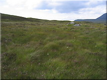 NN3663 : Grassy moorland for mile after mile by Pip Rolls