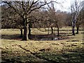 TL9580 : Dew Pond on Knettishall Heath by Simon Peck