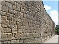 NZ2463 : 14th C town walls (3) by Mike Quinn