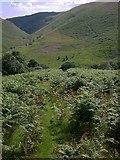 SN7751 : Bracken-covered slope in Cwm Doethie by Rudi Winter