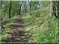 SO7637 : Path climbing Hollybush Hill by Trevor Rickard