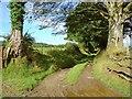 SN1737 : Lane to Pen-yr-allt, Llanfair Nant-gwyn by Dylan Moore