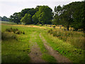 NT9502 : The track to Lady's Well, Holystone by Chris Gunns