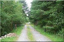 SH7140 : Woodland Path near Llan Ffestiniog by Jeff Buck
