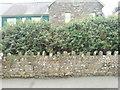 SM8613 : Hiding behind an Escallonia hedge by Deborah Tilley