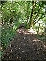 SP5356 : Charwelton bridleway by Ian Rob
