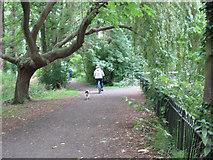 TQ2668 : The Wandle Trail through Ravensbury Park by Stephen Craven