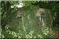 SU6086 : Covered in ivy by Bill Nicholls