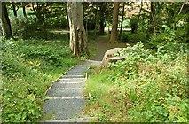 J4772 : Steps, Killynether Wood by Albert Bridge