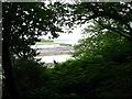 SM9711 : Western Cleddau through the trees by Shaun Butler