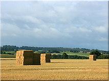 ST8348 : 2008 : Former wheatfield near Chapmanslade by Maurice Pullin