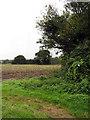 TF9831 : Field beside Croxton Road by Evelyn Simak