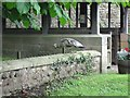 NZ2215 : Lych Gate and Peahen by Antonia