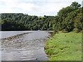 SX8357 : River Dart at Sharpham Point by David Hawgood