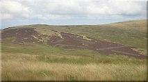 NN9507 : Heather patterns, Carlownie Hill by Richard Webb