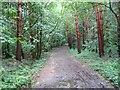 NZ2571 : Woodland in Gosforth Park by Antonia