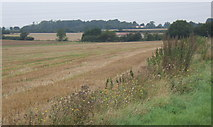 TM1551 : Fields west of Henley by Andrew Hill