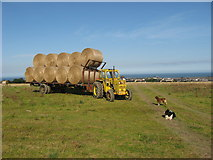 O1763 : Bringing in the bales at Flemingtown, Co. Dublin by Kieran Campbell