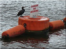 ST1972 : Cormorant on guard by Robin Drayton