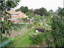 TR3752 : Allotment gardens from Park Avenue by Nick Smith