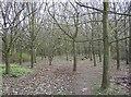 TM4194 : Woodland at Bull's Green by Graham Horn