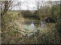 TM3795 : Pond near Hales Hall by Graham Horn