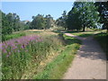 SO7640 : Footpath to Pinnacle Hill by Trevor Rickard