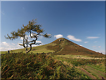 NZ5812 : Tree and the Topping by Stephen McCulloch